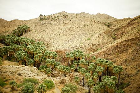 美国加利福尼亚棕榈泉峡谷棕榈树图片