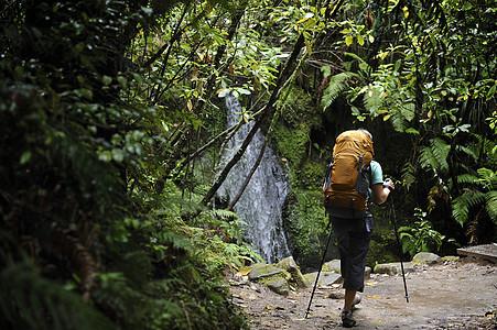 在新西兰茂盛的森林里徒步旅行的女人图片