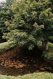 鳟鱼渔业美国纽约图片