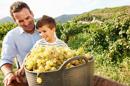 父亲和儿子葡萄园里的葡萄图片