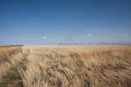 美国爱达荷州干草场图片