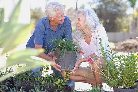 老夫妇一起园艺图片