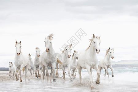 海滩上的白马图片
