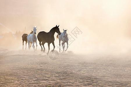 奔跑的马图片