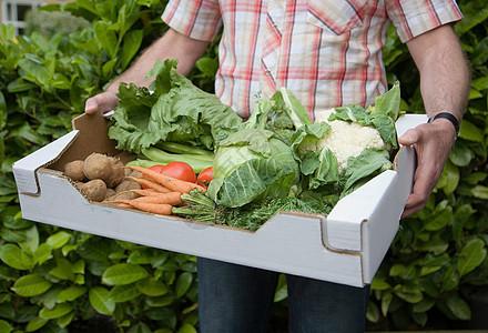 手拿新鲜蔬菜盒图片