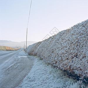 霜冻清晨乡间小路图片