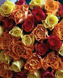 一束玫瑰图片