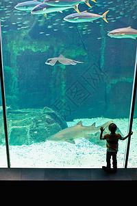 男孩在水族馆里欣赏鱼图片
