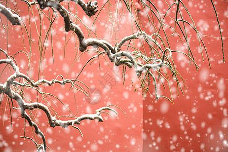 北京故宫红墙飘雪图片