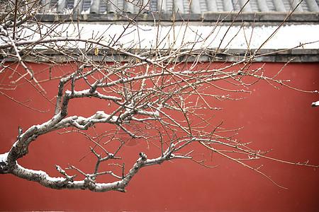 北京故宫红墙的雪景图片