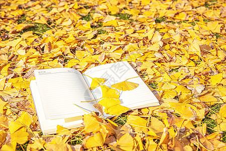 银杏叶与书本图片