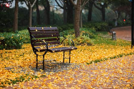 秋季下雨天公园里的长凳银杏落叶图片
