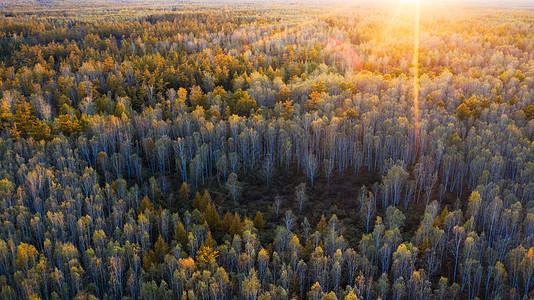 秋天的森林风景图片