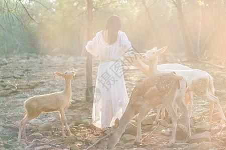 湖北荆门白鹿山庄阳光下和白鹿游戏玩耍的美女图片