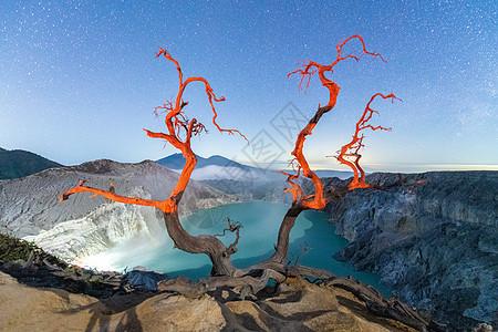 印尼宜珍火山上奇特的树图片