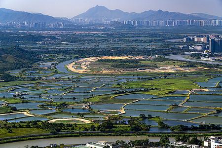 深圳罗湖区鱼塘图片