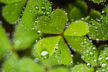叶子上的雨滴图片