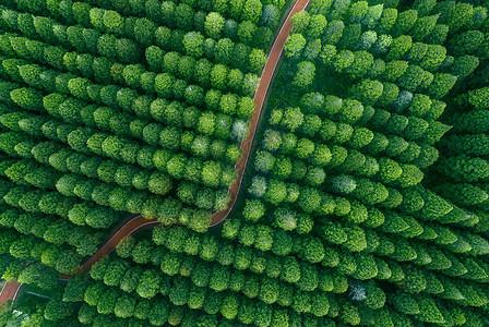 航拍湿地绿洲图片