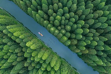 世界遗产黄海湿地图片