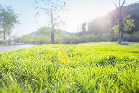 春天阳光复苏绿色草地图片