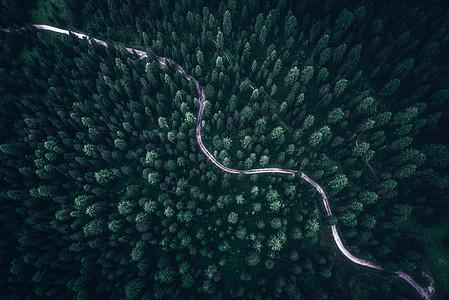 盐城保护区水上森林图片