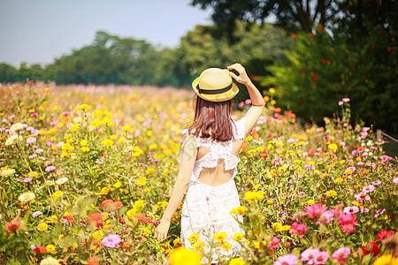 野菊花丛中美女背影赏花图片