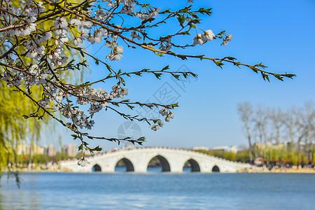 北京春天盛开的樱花图片
