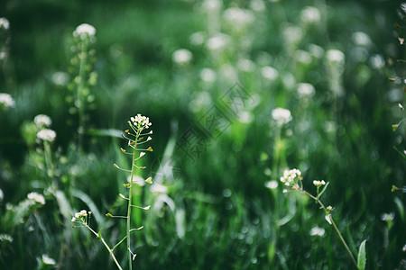 春天阳光下盛开的小花与绿色植物图片