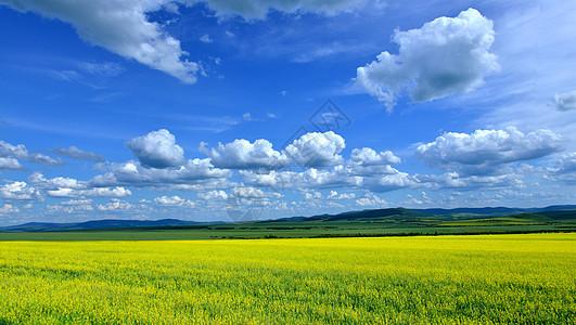 内蒙古根河油菜花图片