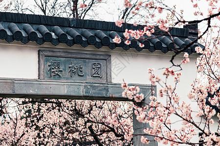 南京玄武湖樱洲春天的樱花图片