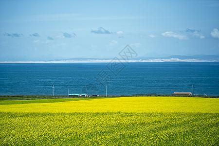 青海湖油菜花田图片
