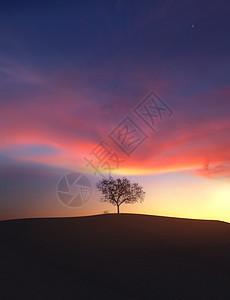 晚霞下的大树 图片