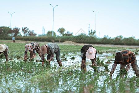田园劳动者图片