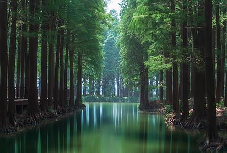 滩涂湿地森林风光图片