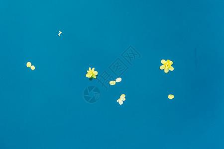 飘在水面的花瓣图片