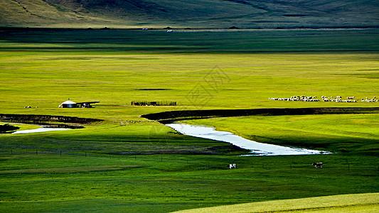 呼伦贝尔大草原莫日格勒河牛羊成群图片