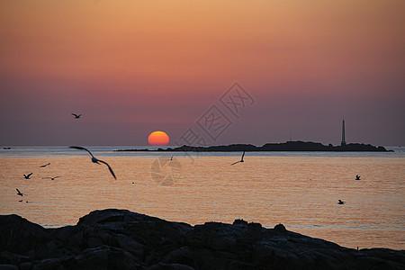 海上日出海鸥飞翔图片