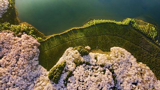 贵州平坝万亩樱花园航拍图片