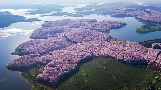 贵州平坝万亩樱花园赏樱花航拍图片