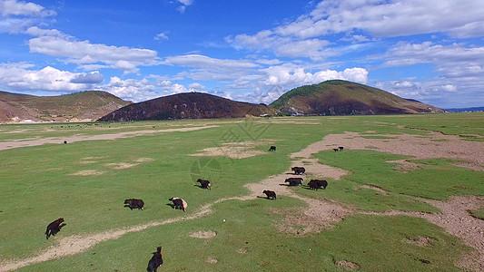 云南纳帕海草原图片
