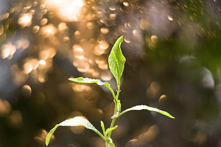 叶子背景虚化图片