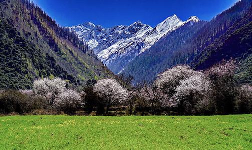 西藏林芝波密桃花图片