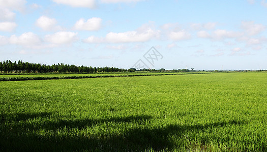 乡村的稻稞田图片
