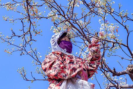 在梨园劳动的农民图片