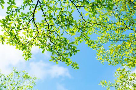 清新绿叶春意盎然图片