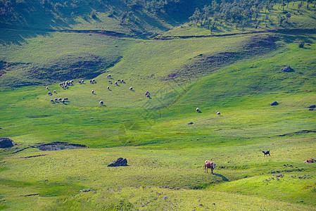 云南昆明寻甸高山草甸自然风光图片