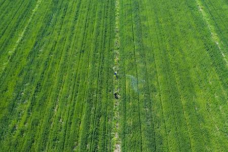 田地里播洒农药的农民图片