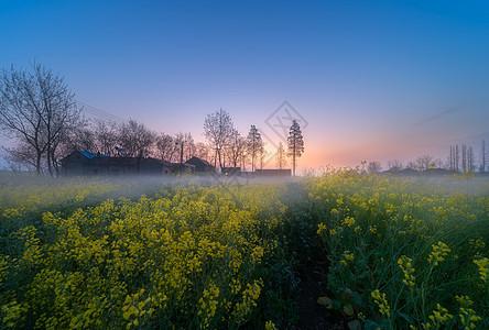 春意盎然油菜花美景图片