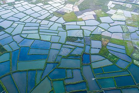 航拍水稻田图片