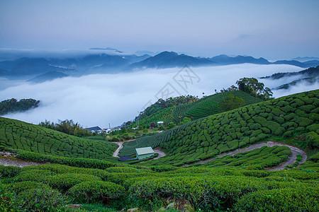 云雾缭绕茶园风光图片